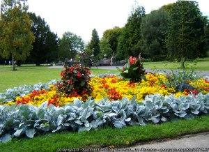 Seasonal gardening: Summer bedding