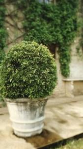 Seasonal Gardening: Container plant