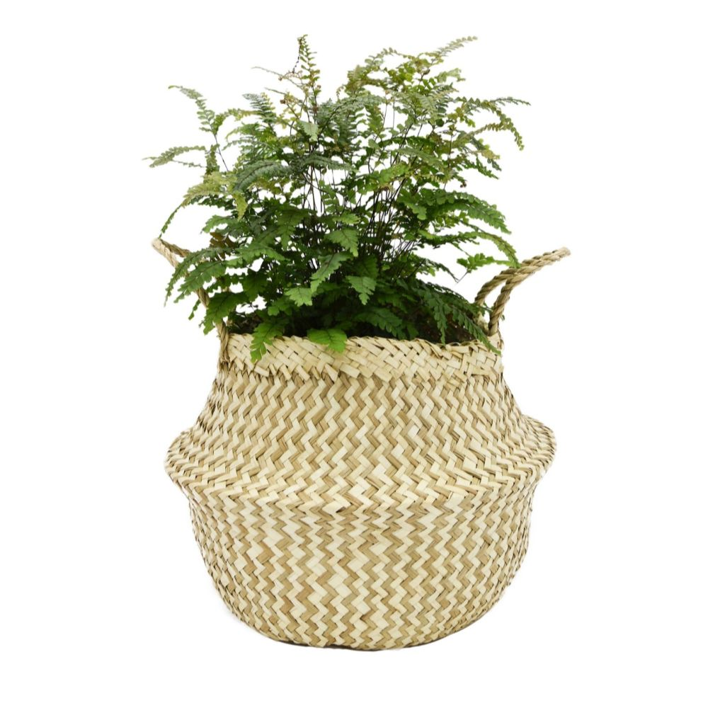 Fern with seagrass planter