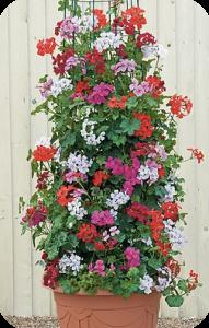 New upright plants