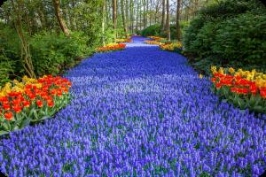 Plant tourism