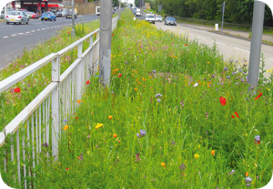 Motorway central reservation planting