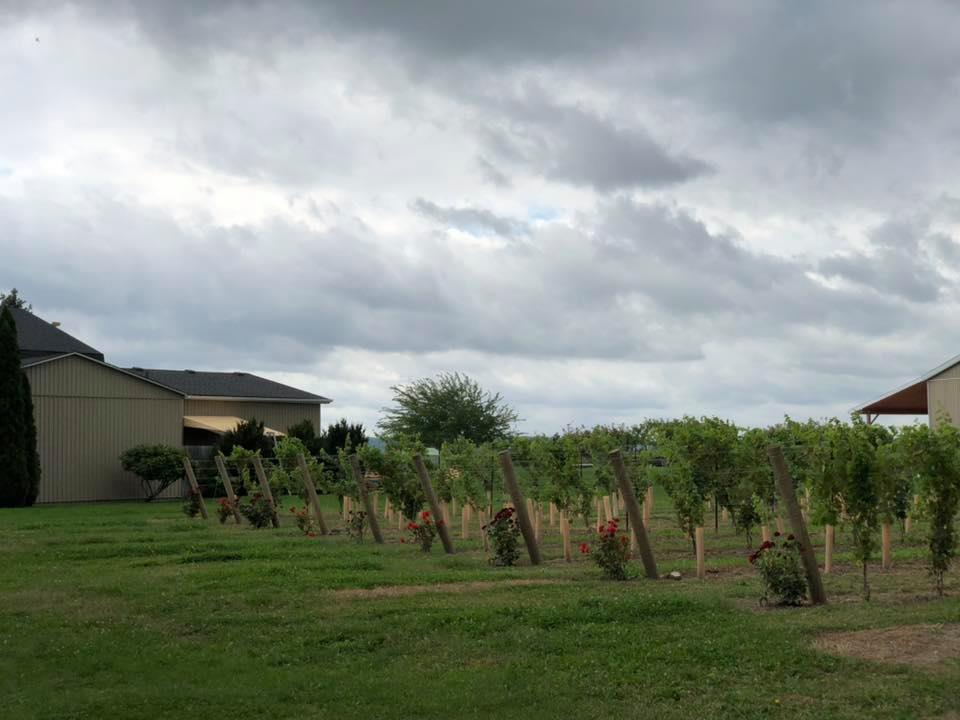 Roses at vineyards