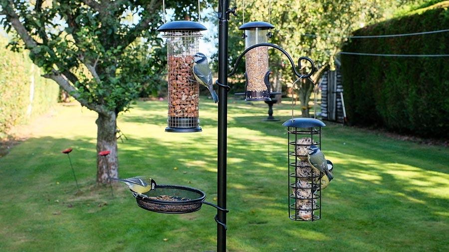 Bird Feeding Station from QVC