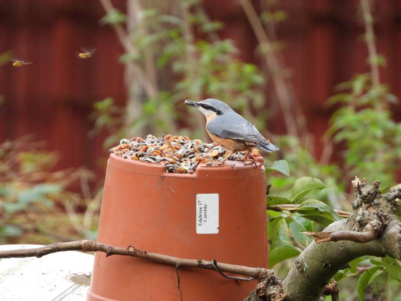 Bird feeder pot