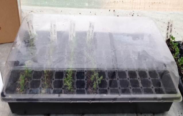 Micropropogation - plants in soil