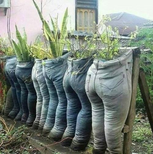 @sunshine.succulents