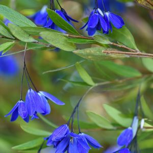 Sollya Ultra Blue