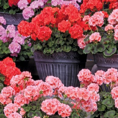 Post lockdown gardening - feature image