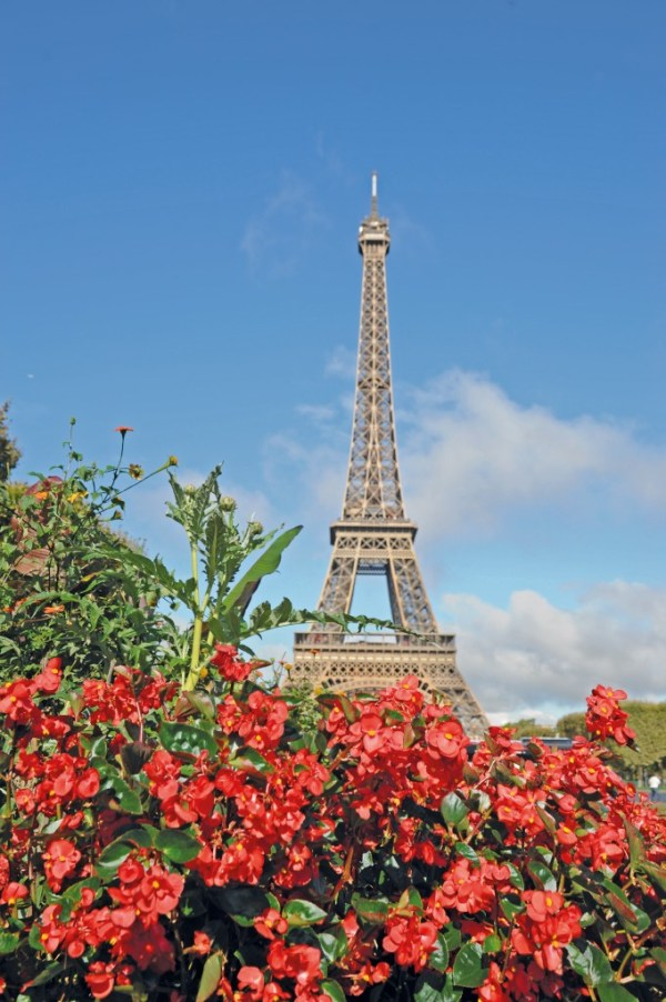 Begonia BIG in front of the Eiffel Tower