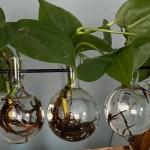 Indoor water planting