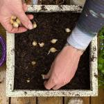 Lasagne planting