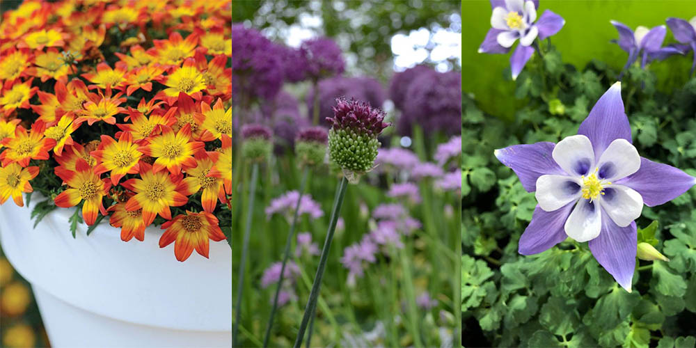 52 plants to grow in a year - feature image