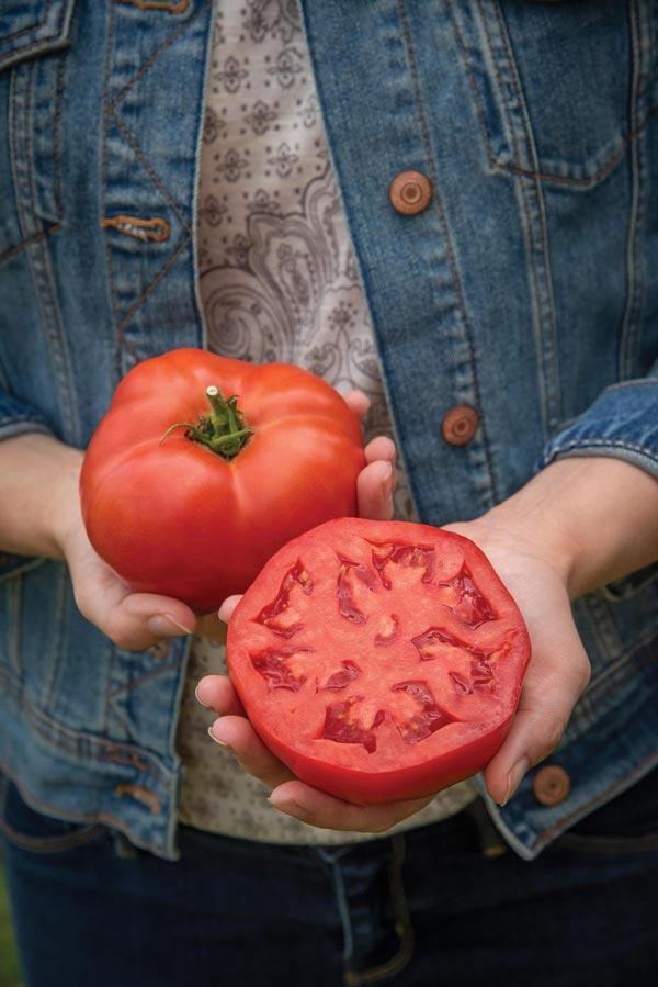 Tomato 'Burlesque'