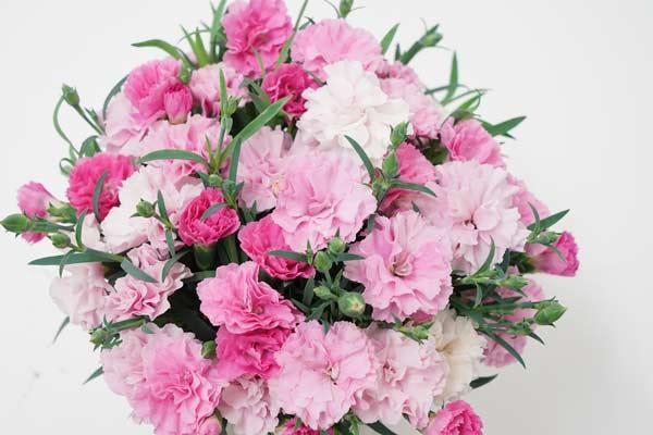 Dianthus I Love U