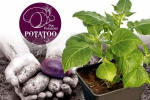Potatoo