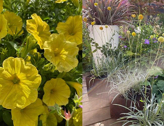 New yellow plants