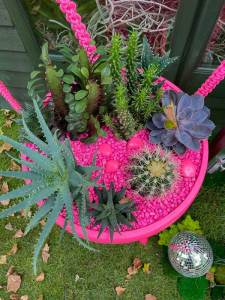 Drag queen style gardens
