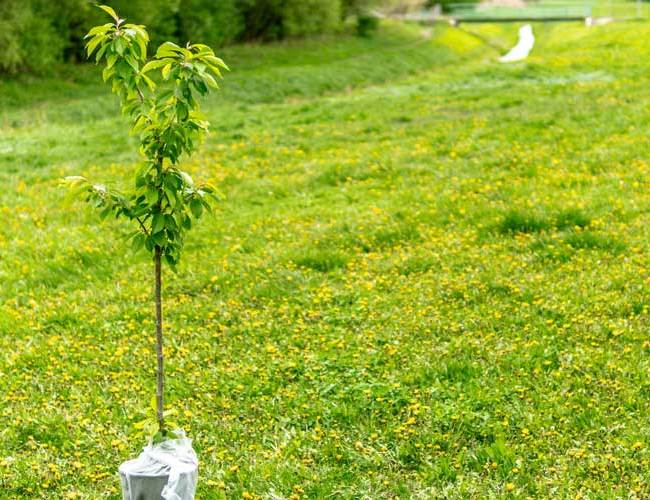 Top tips for tree planting