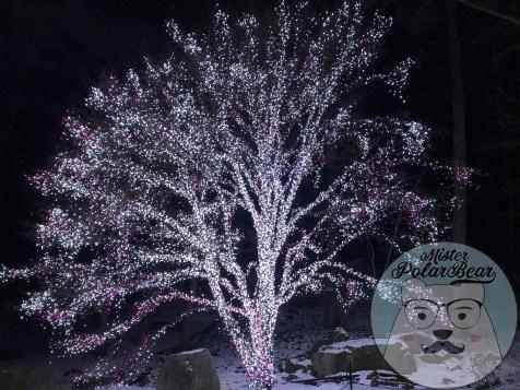 晨靜樹木園,아침고요수목원,五色星光,晨靜樹木3