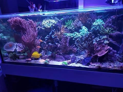 Aquarium de Alexandre