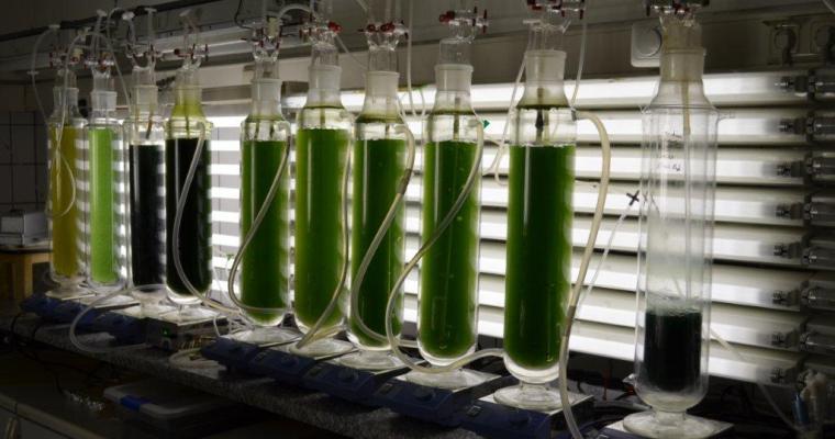 Marine Phytoplankton Growing Conditions