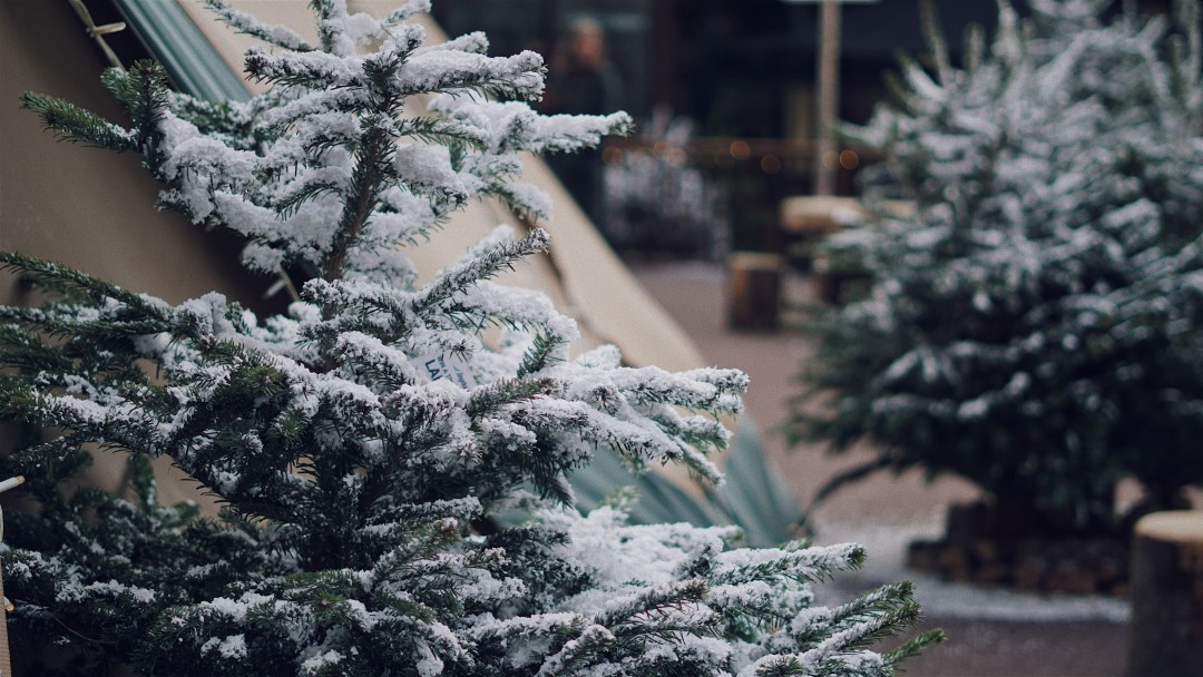 The Winter Forest at Broadgate. The Party Season. Blog by Skirmantas Petraitis.