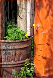 Flower drum...