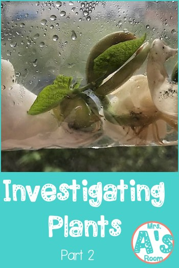 Investigating Plants: Part 2