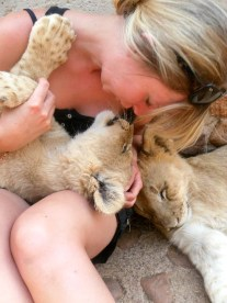 Volunteering with lions in South Africa