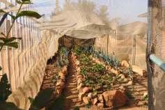 Vegetables gardens at the Khaya centre