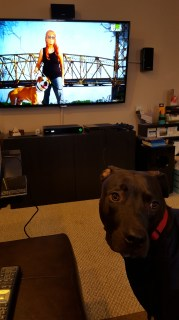 Watching Pit Bulls and Parolees.