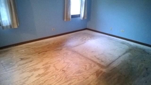 Cat Wood Floor Smell Carpet Vidalondon