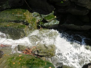 Love the algae covered rocks.