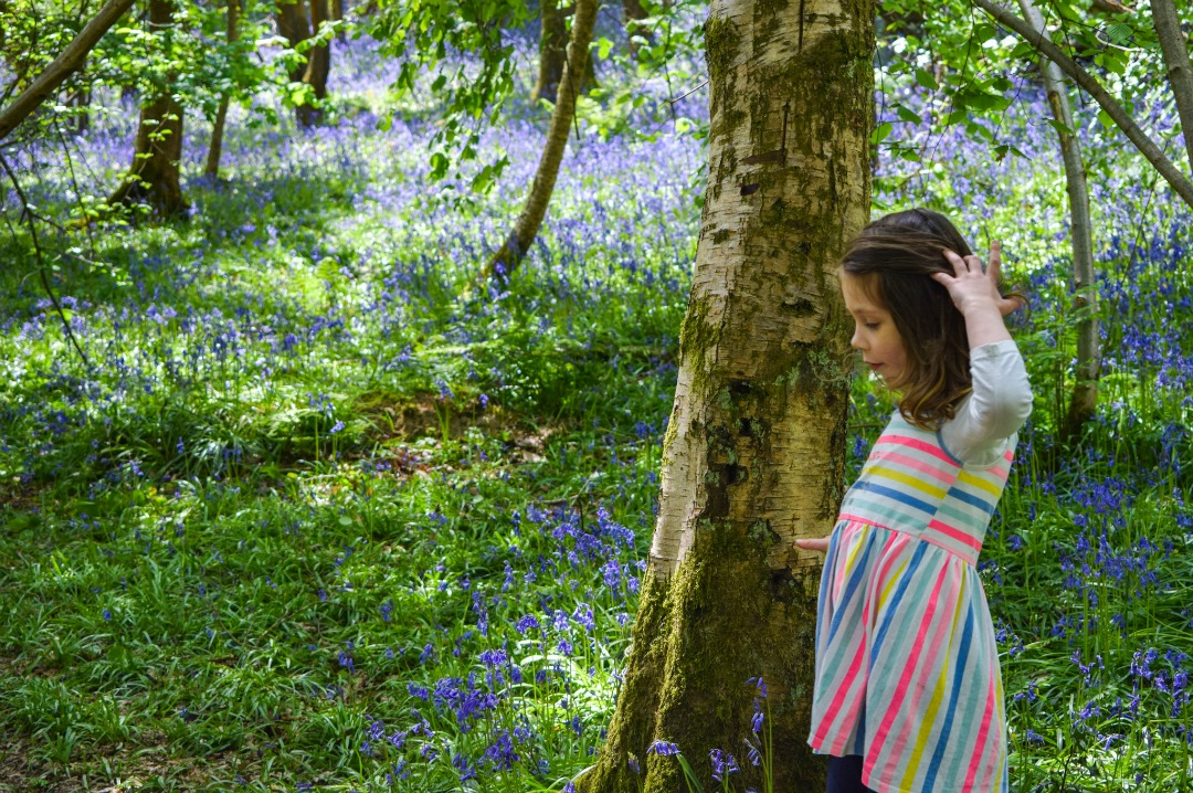 Parenting lessons from bluebells