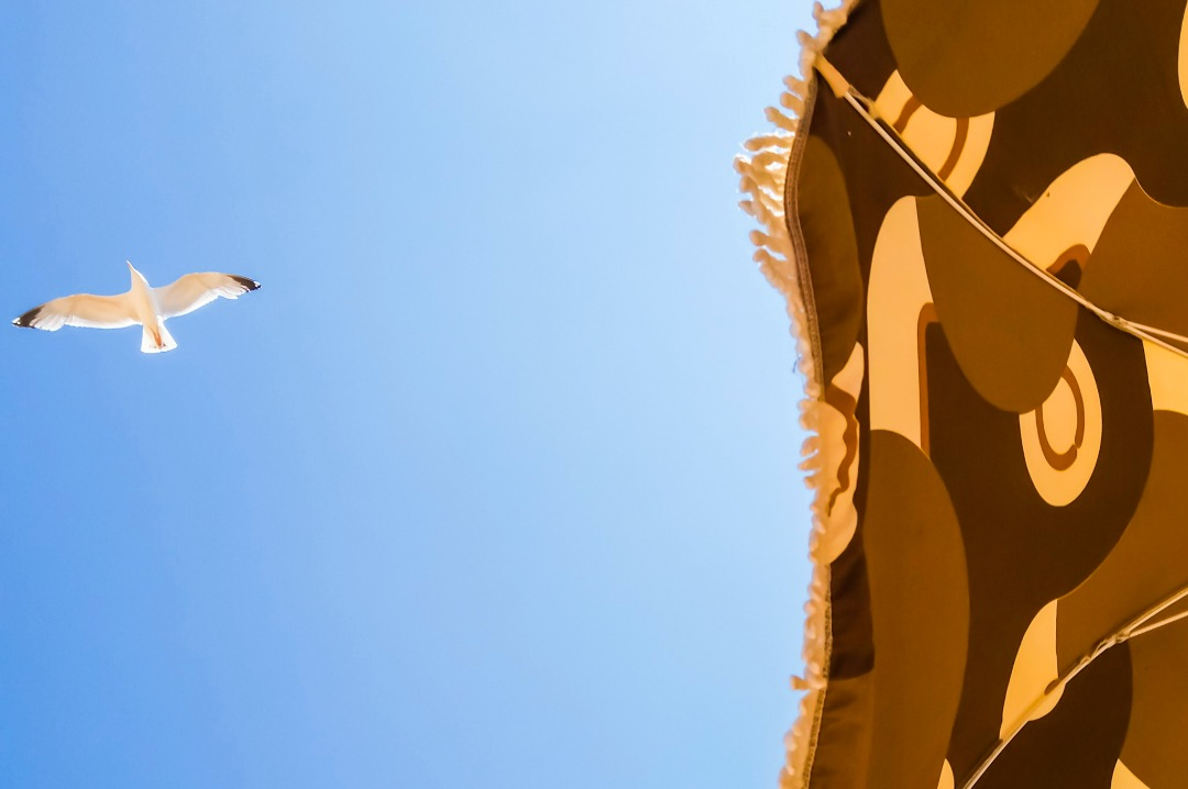 A photograph of a section of sun umbrella, some bright blue sky and a seagull flying overhead - Our week in Broadstairs - Mrs H's favourite things