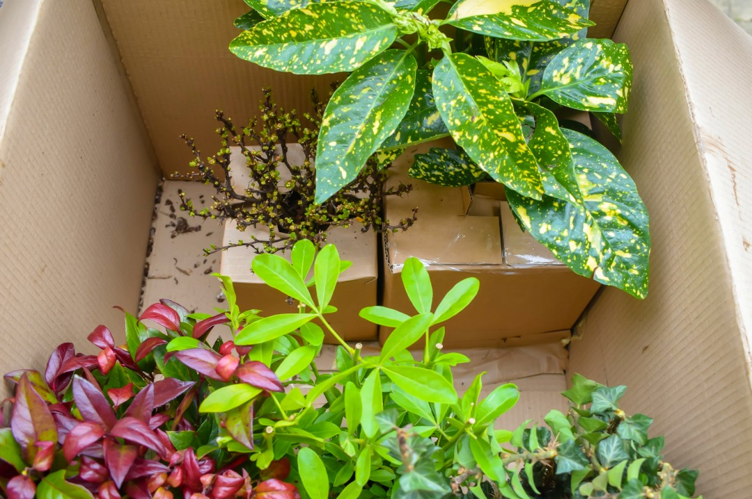 The five plants delivered in the outdoor plant BloomBox Club Subscription box - the gardening subscription box - and their sturdy packaging - Gardening Myself Happy with BloomBox Club - Mrs H's favourite things
