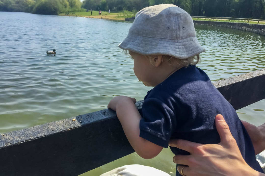 A photograph of a little boy looking at some swans on a lake on a beautiful sunny day - Our Weekend Happy 13 - Country Parks, Woodland Walks & Parties - Mrs H's favourite things