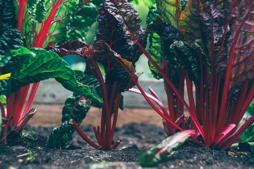 A photograph of some vegetables in a vegetable patch - Get Your Garden Summer Ready With These Nifty Ideas - Mrs H's favourite things