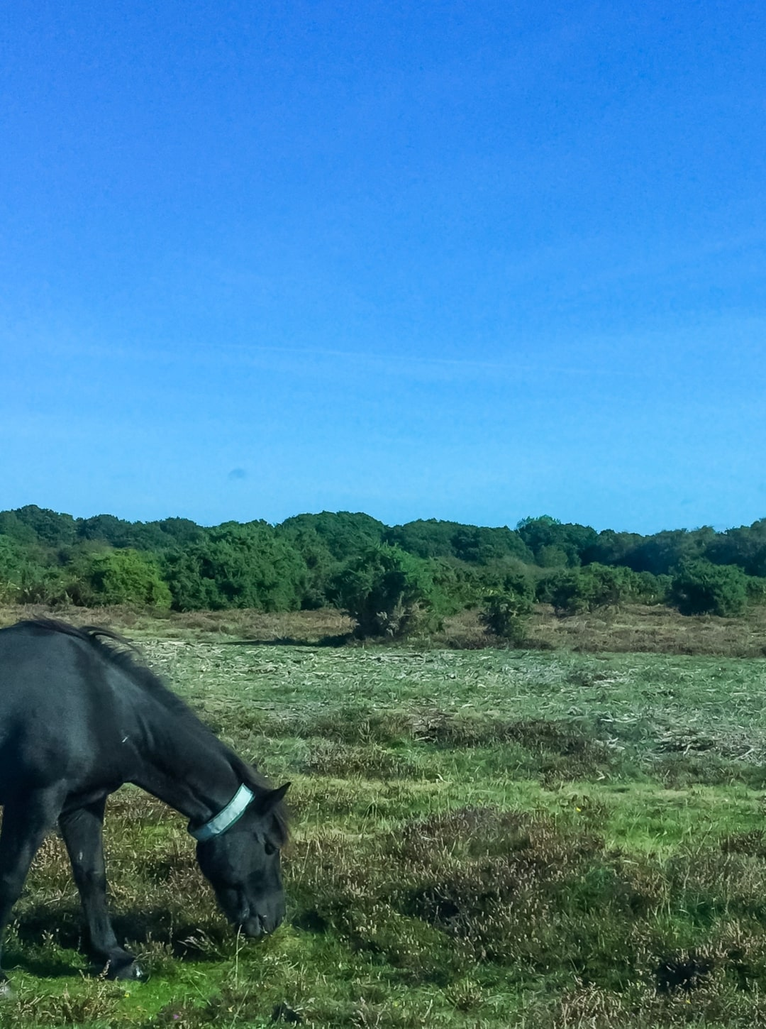A photograph of a pony in Brockenhurst, the New Forest - Finding Happiness and Chasing Rainbows - September 2018 - Mrs H's favourite things