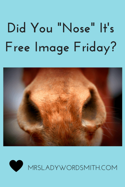 Welcome to Free Image Friday: Free Photography