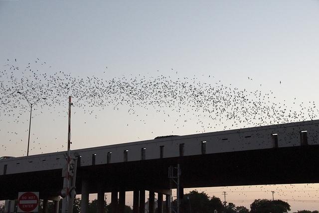 Round Rock Bat Bridge in an alternative travel guide for Austin