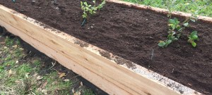 A Raised Bed Garden for growing blueberries and blackberries