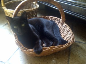 Image of a cat in a basket