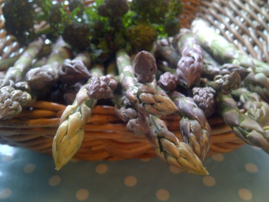 Image of asparagus spears in a basket