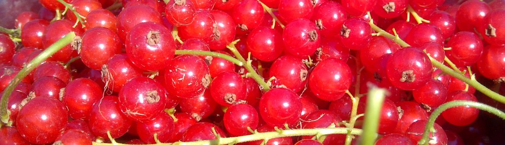 Image of a bowl of redcurrants