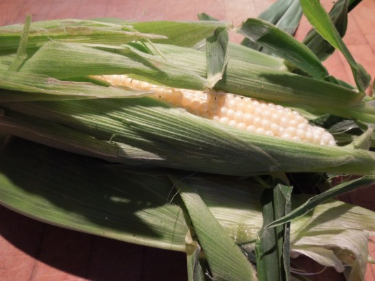 Image of corn cobs