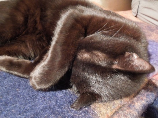 Image of Mrs Portly's cat sleeping off an overdose of steak trimmings