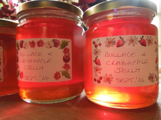 Image of bullace and crab apple jelly, potted and labelled