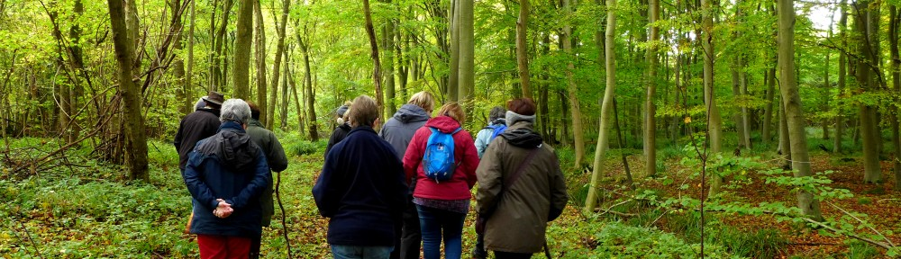 Image of funghi-foraging group